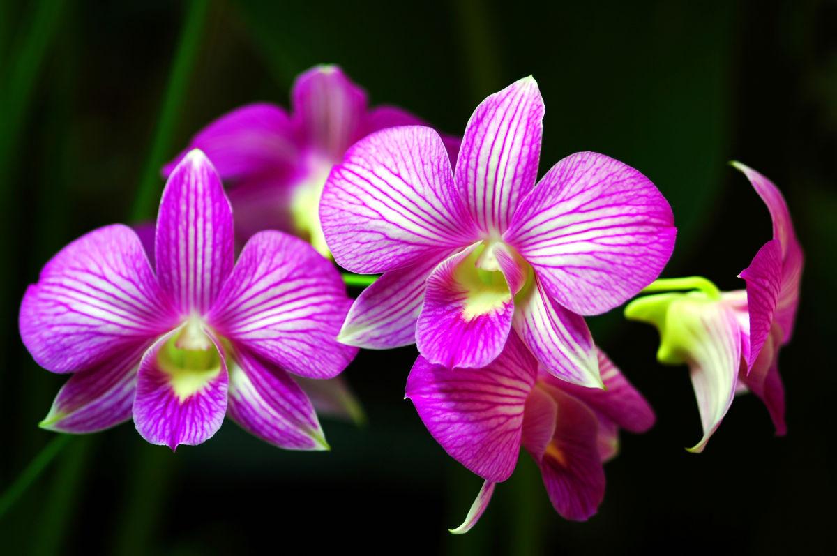 come curare le orchidee in vaso vivaio Roma Horti di Veio
